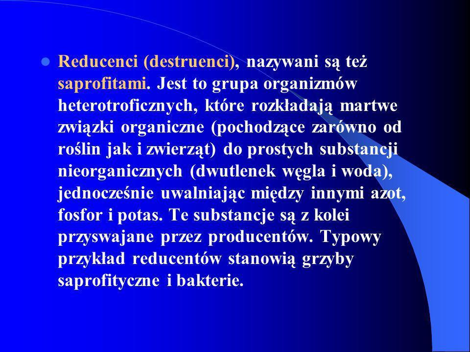 Reducenci (destruenci), nazywani są też saprofitami