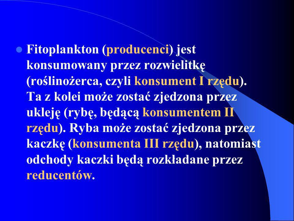 Fitoplankton (producenci) jest konsumowany przez rozwielitkę (roślinożerca, czyli konsument I rzędu).
