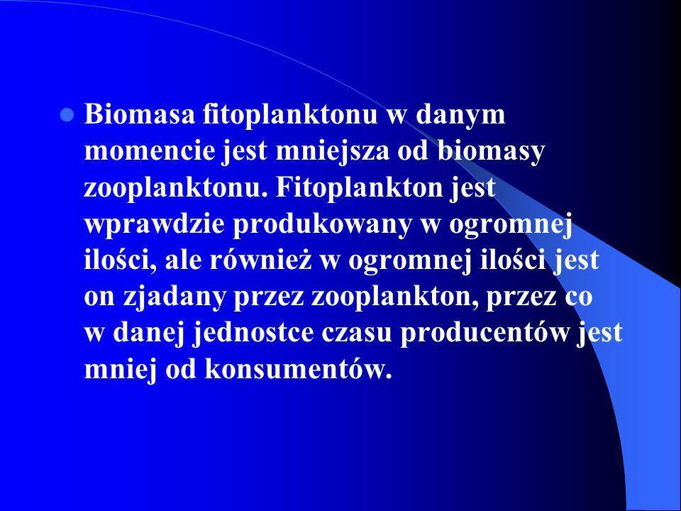 Biomasa fitoplanktonu w danym momencie jest mniejsza od biomasy zooplanktonu.