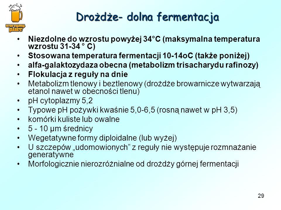 Drożdże- dolna fermentacja