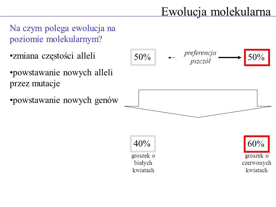 Ewolucja molekularna Na czym polega ewolucja na poziomie molekularnym