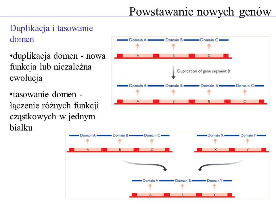 Powstawanie nowych genów