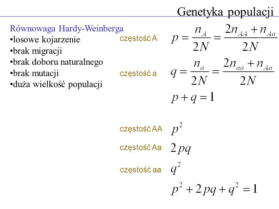 Genetyka populacji Równowaga Hardy-Weinberga losowe kojarzenie