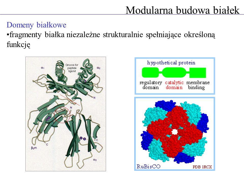 Modularna budowa białek