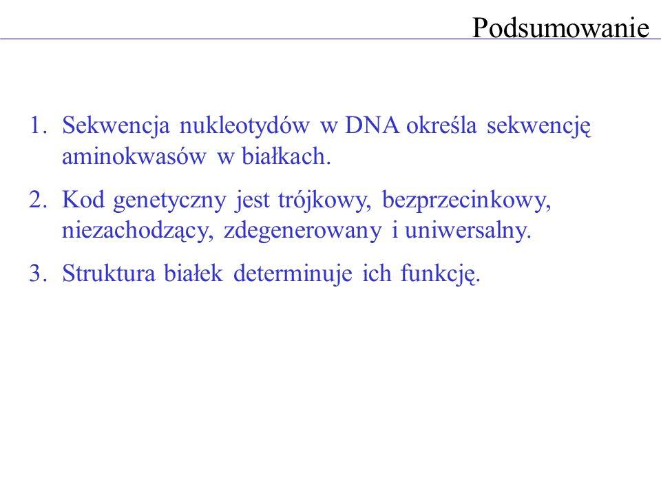 PodsumowanieSekwencja nukleotydów w DNA określa sekwencję aminokwasów w białkach.