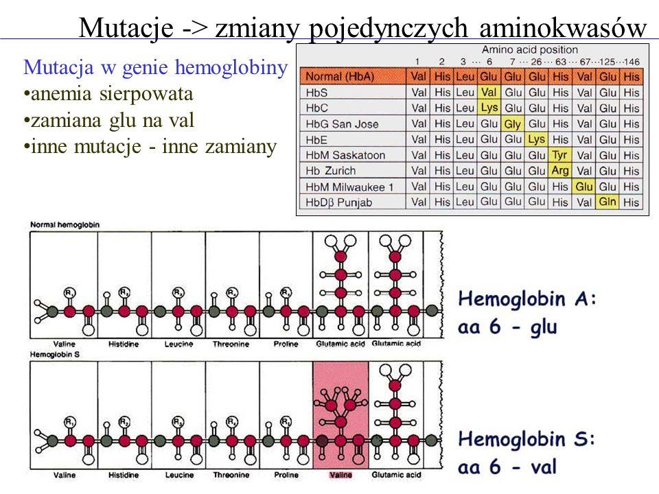 Mutacje -> zmiany pojedynczych aminokwasów