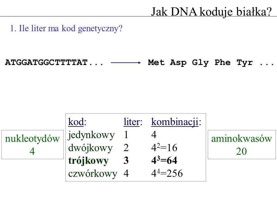 Jak DNA koduje białka kod: liter: kombinacji: jedynkowy 1 4