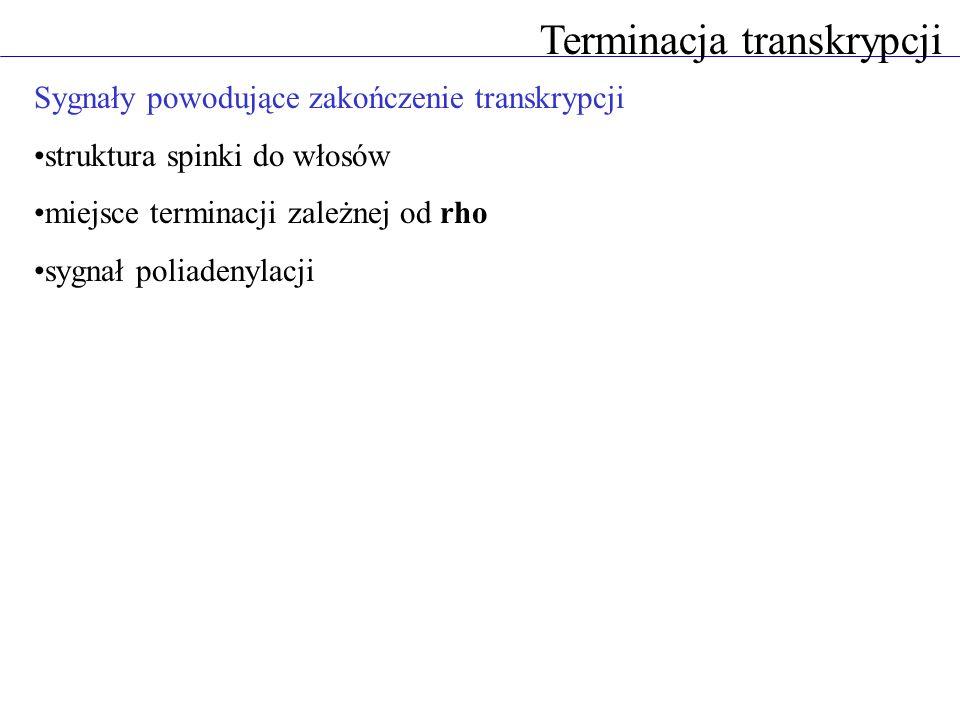 Terminacja transkrypcji