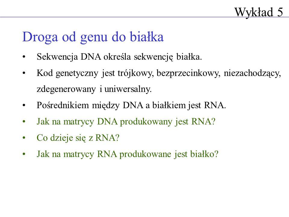 Droga od genu do białka Wykład 5