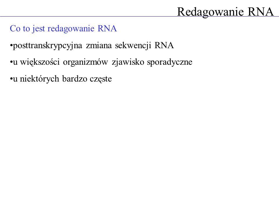 Redagowanie RNA Co to jest redagowanie RNA