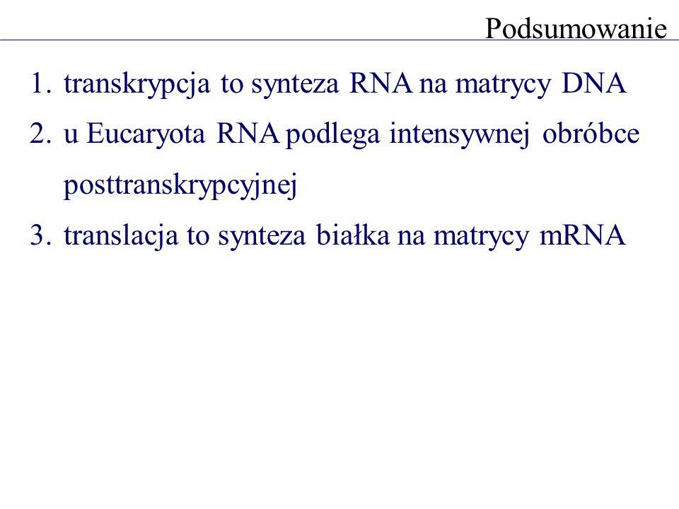 Podsumowanie transkrypcja to synteza RNA na matrycy DNA. u Eucaryota RNA podlega intensywnej obróbce posttranskrypcyjnej.