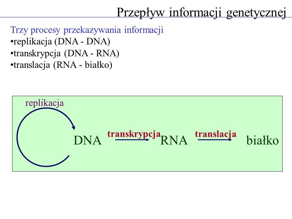 Przepływ informacji genetycznej