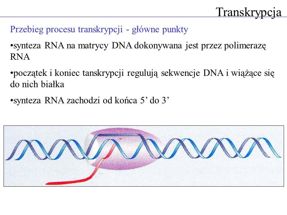 Transkrypcja Przebieg procesu transkrypcji - główne punkty