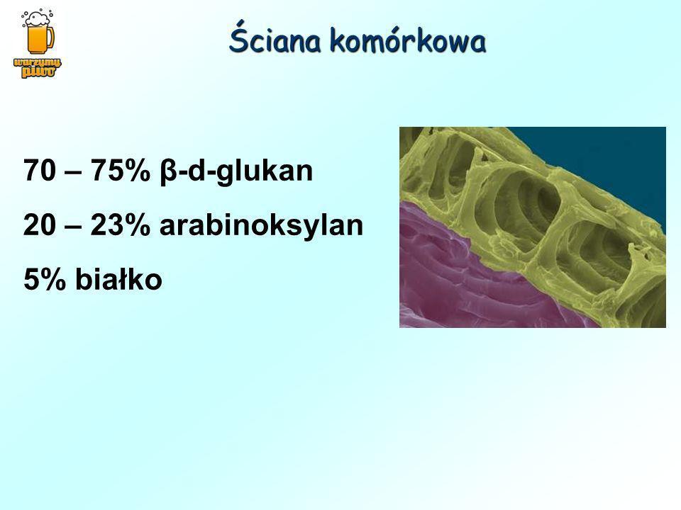 Ściana komórkowa 70 – 75% β-d-glukan 20 – 23% arabinoksylan 5% białko