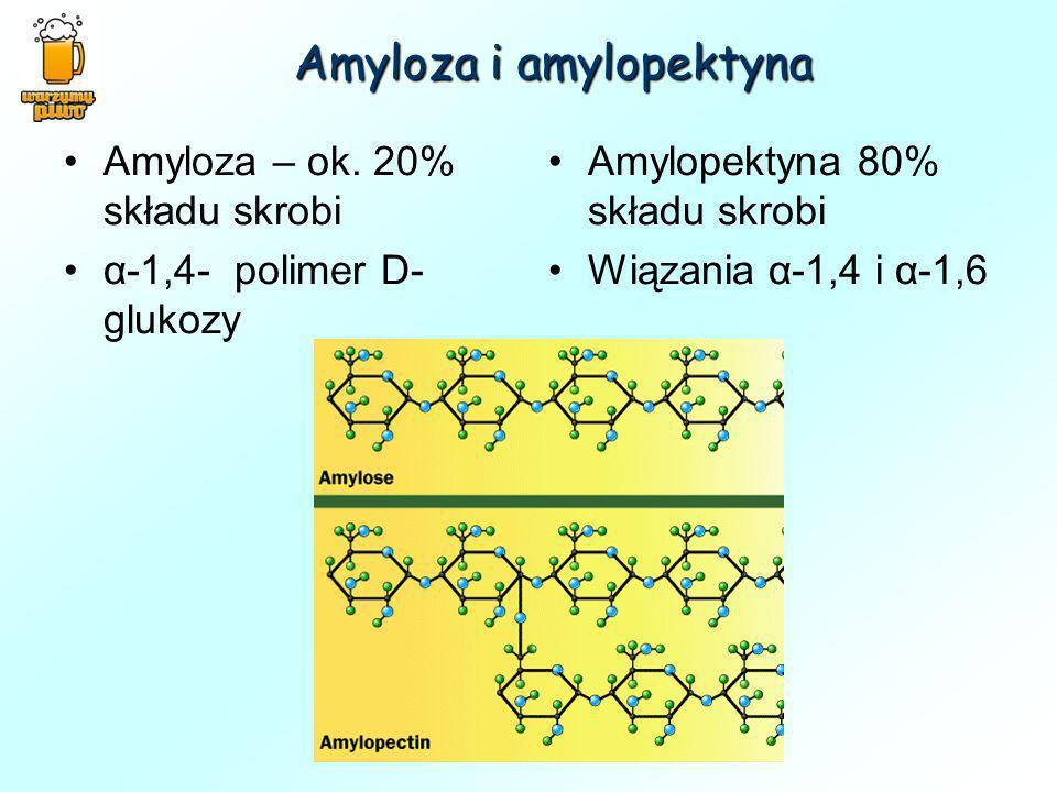 Amyloza i amylopektyna