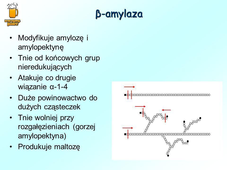 β-amylaza Modyfikuje amylozę i amylopektynę