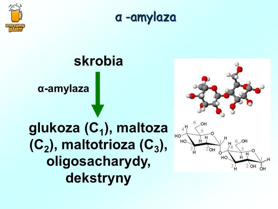 α -amylaza skrobia. glukoza (C1), maltoza (C2), maltotrioza (C3), oligosacharydy, dekstryny.