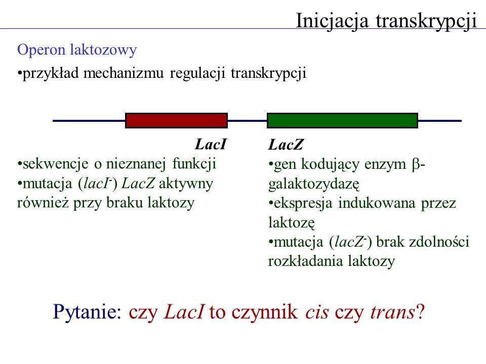 Inicjacja transkrypcji