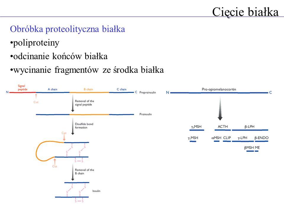 Cięcie białka Obróbka proteolityczna białka poliproteiny