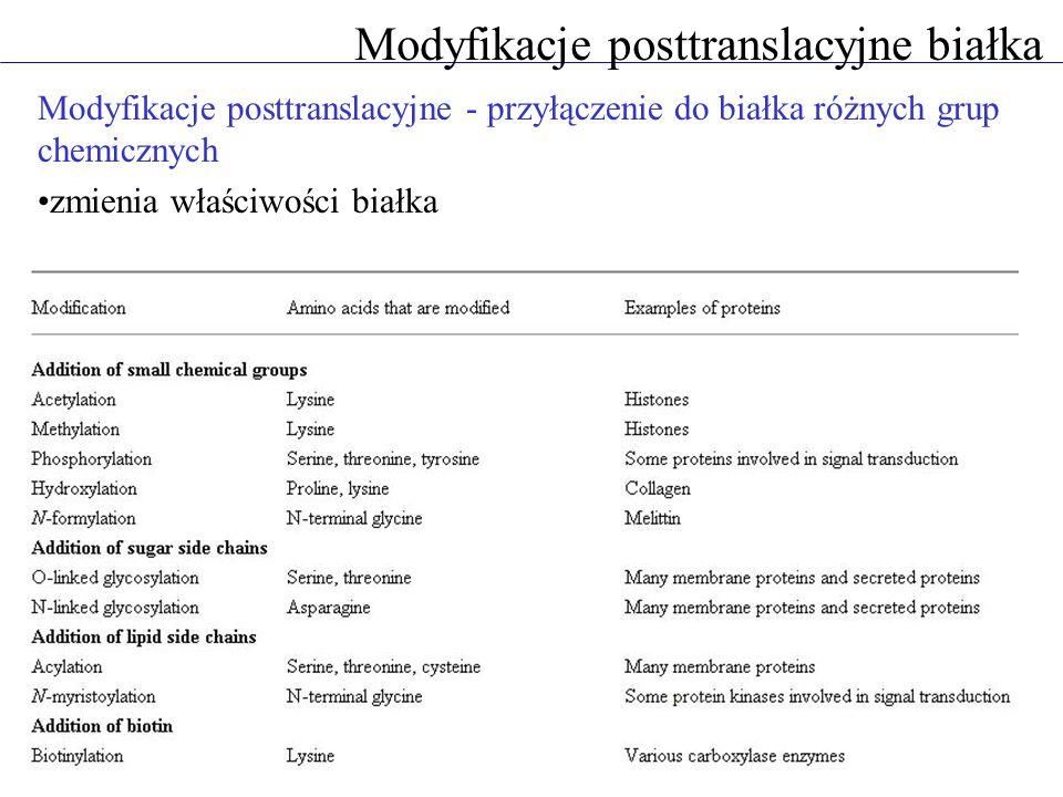 Modyfikacje posttranslacyjne białka