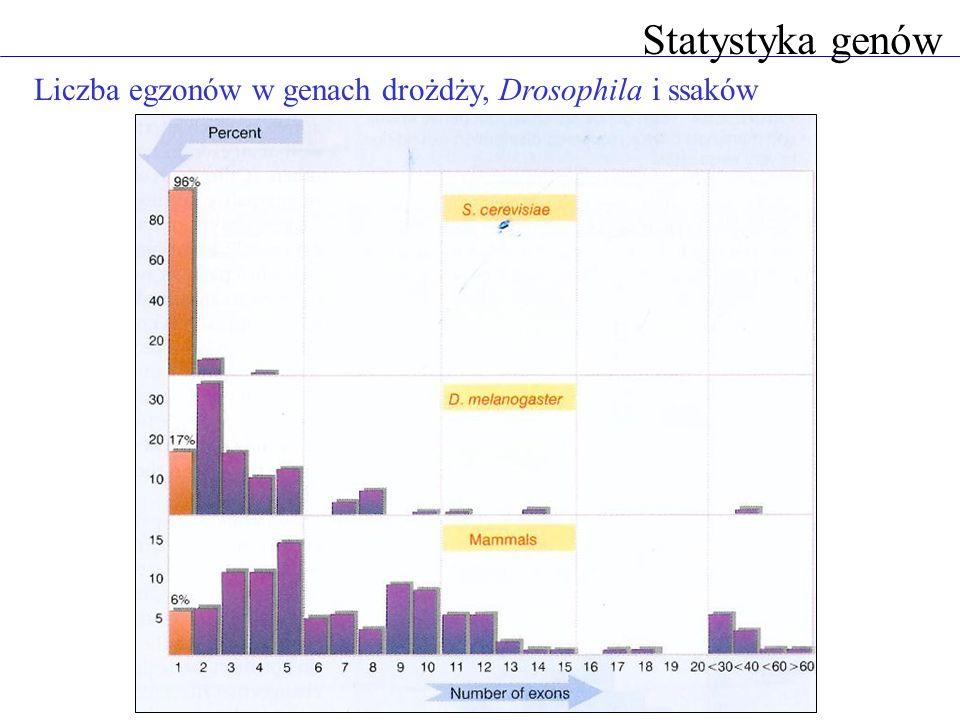 Statystyka genów Liczba egzonów w genach drożdży, Drosophila i ssaków