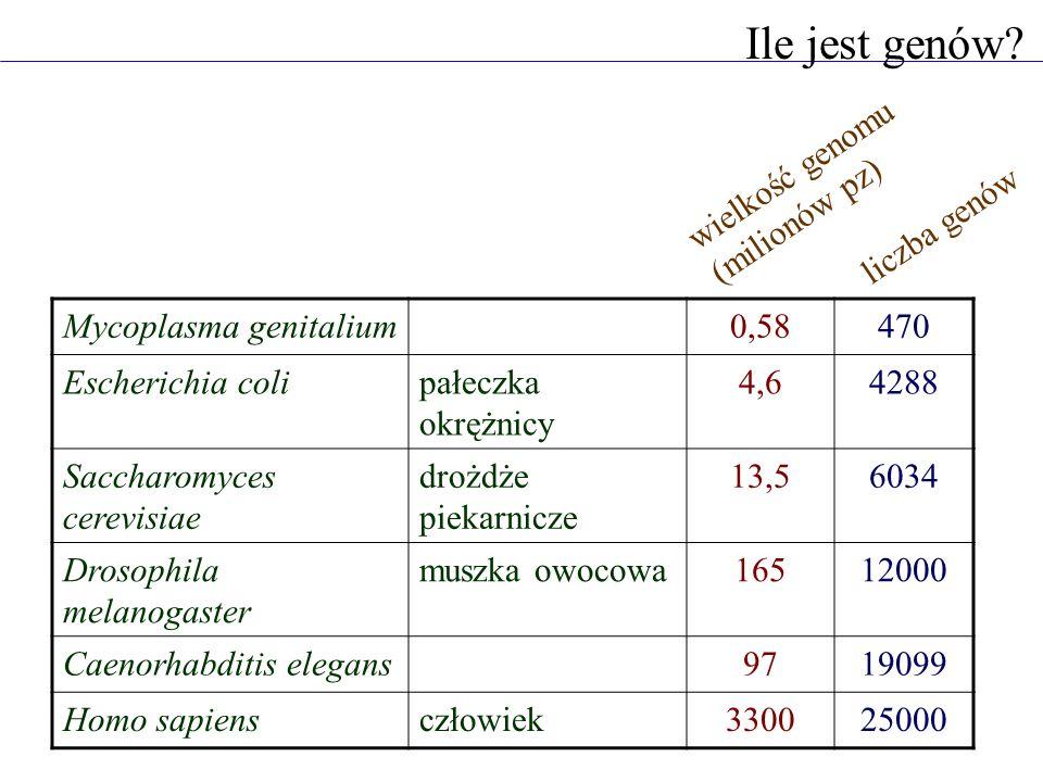 Ile jest genów wielkość genomu (milionów pz) liczba genów