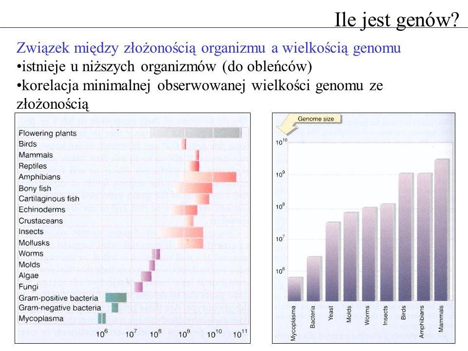 Ile jest genów Związek między złożonością organizmu a wielkością genomu. istnieje u niższych organizmów (do obleńców)