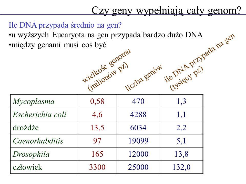 Czy geny wypełniają cały genom