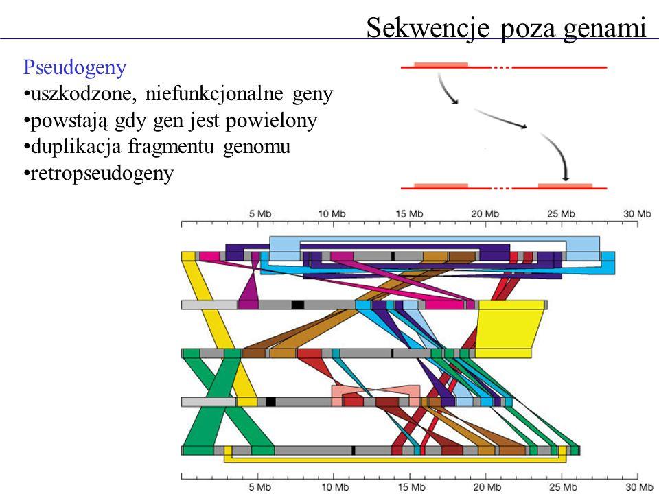 Sekwencje poza genami Pseudogeny uszkodzone, niefunkcjonalne geny