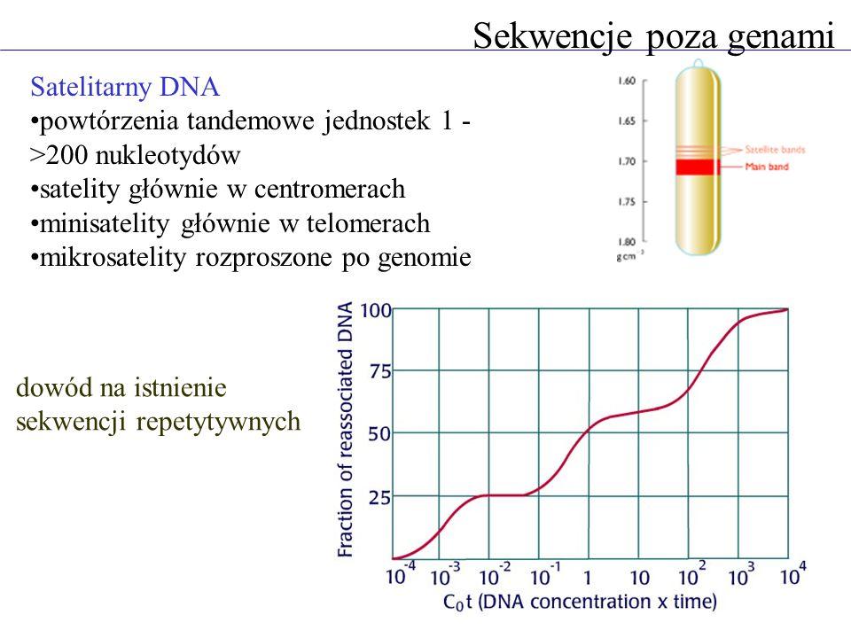 Sekwencje poza genami Satelitarny DNA