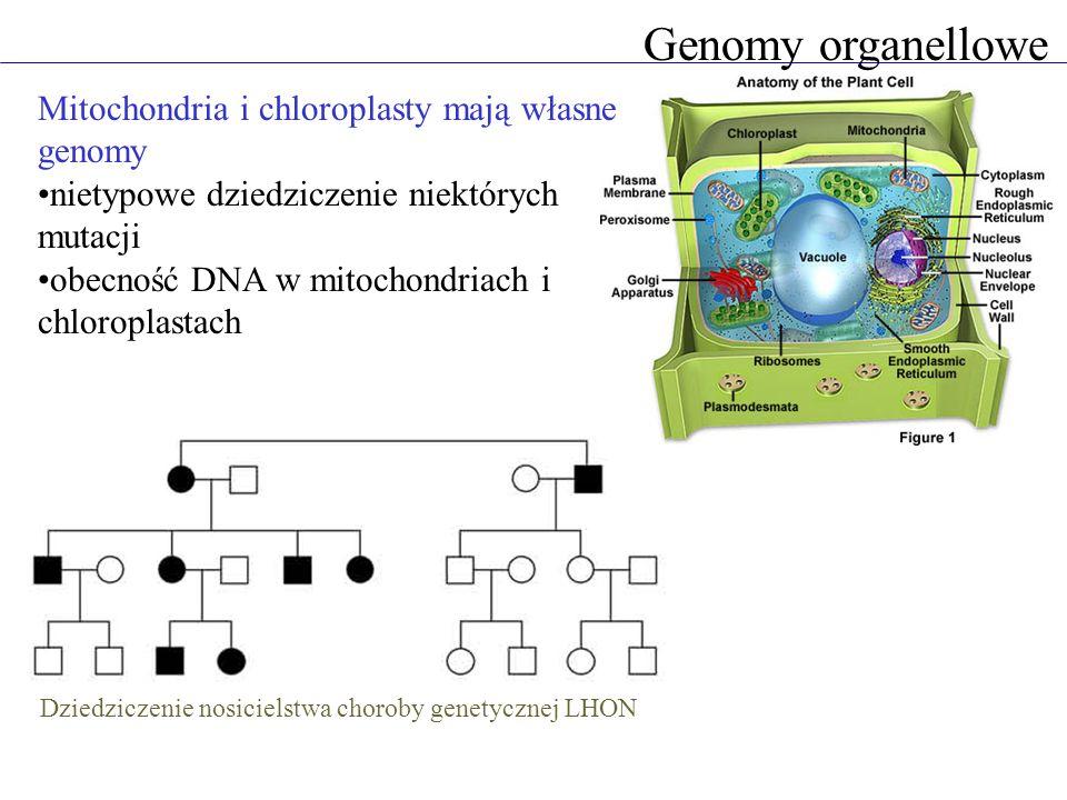 Dziedziczenie nosicielstwa choroby genetycznej LHON
