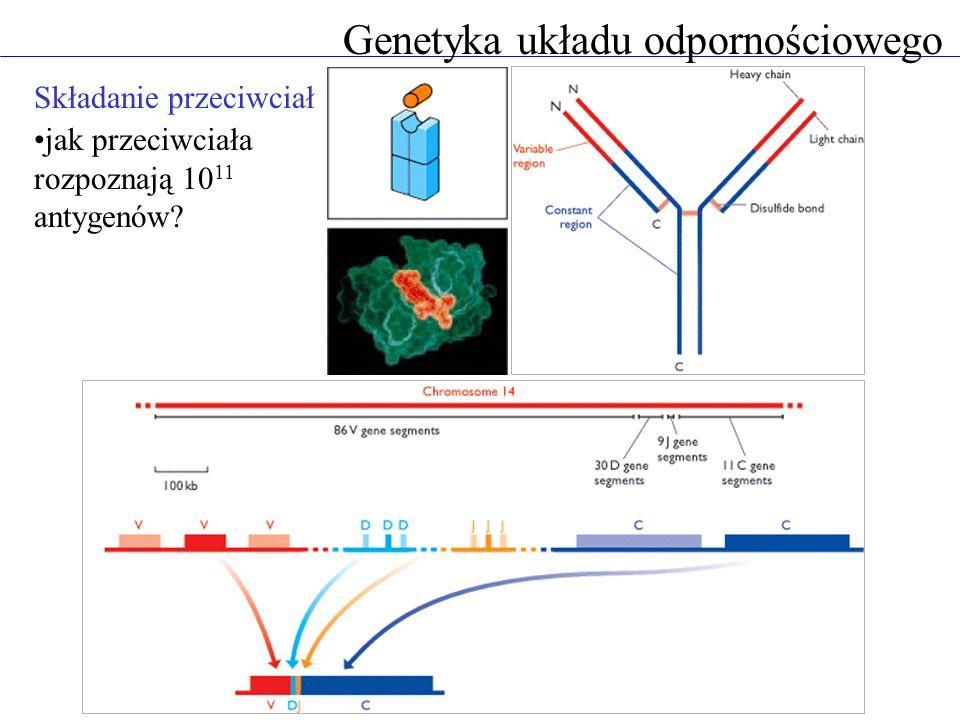 Genetyka układu odpornościowego