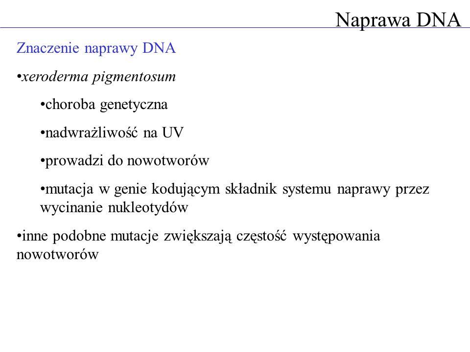 Naprawa DNA Znaczenie naprawy DNA xeroderma pigmentosum