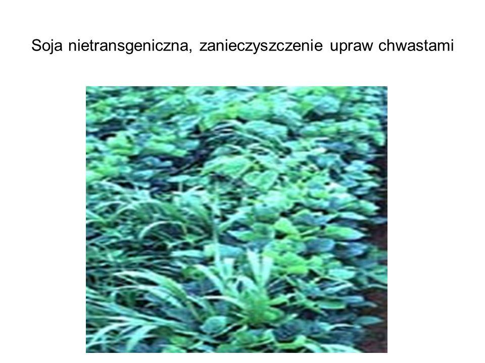 Soja nietransgeniczna, zanieczyszczenie upraw chwastami