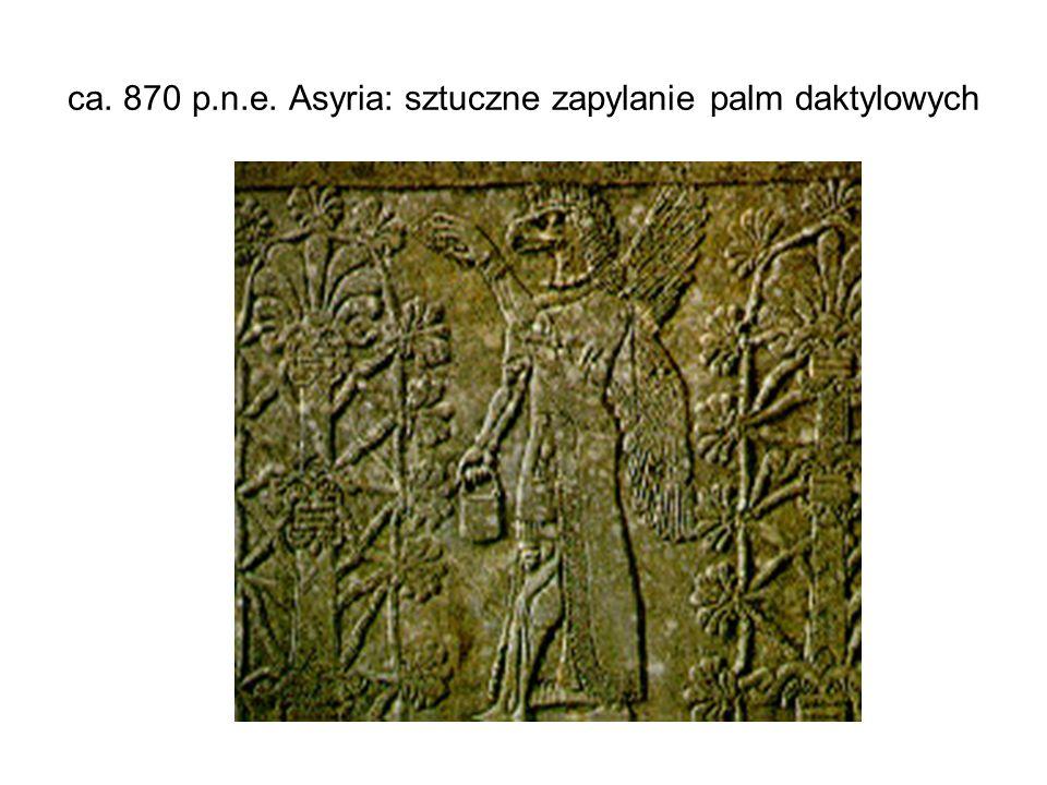 ca. 870 p.n.e. Asyria: sztuczne zapylanie palm daktylowych