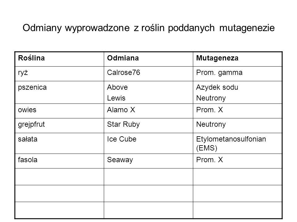Odmiany wyprowadzone z roślin poddanych mutagenezie