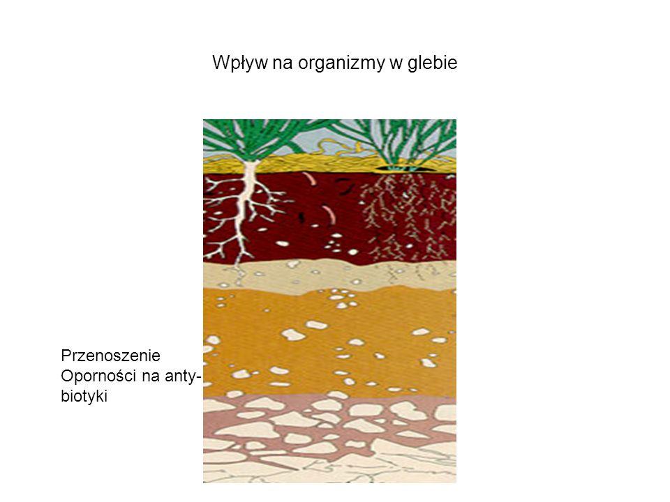 Wpływ na organizmy w glebie