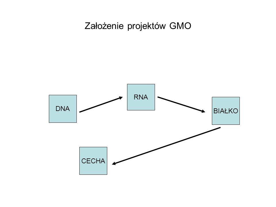 Założenie projektów GMO
