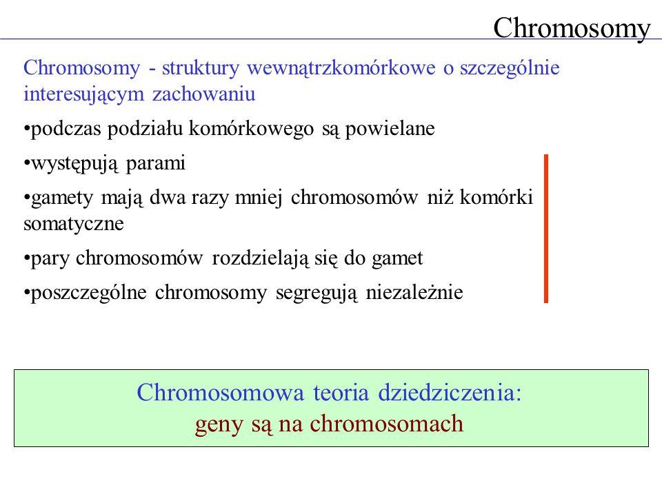 Chromosomy Chromosomowa teoria dziedziczenia: geny są na chromosomach