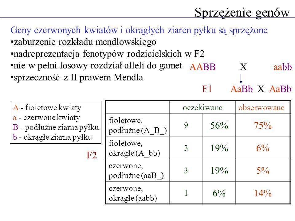 Sprzężenie genów Geny czerwonych kwiatów i okrągłych ziaren pyłku są sprzężone. zaburzenie rozkładu mendlowskiego.
