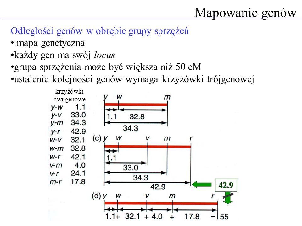Mapowanie genów Odległości genów w obrębie grupy sprzężeń