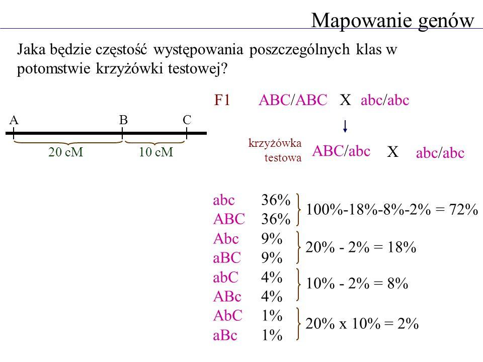 Mapowanie genów Jaka będzie częstość występowania poszczególnych klas w potomstwie krzyżówki testowej