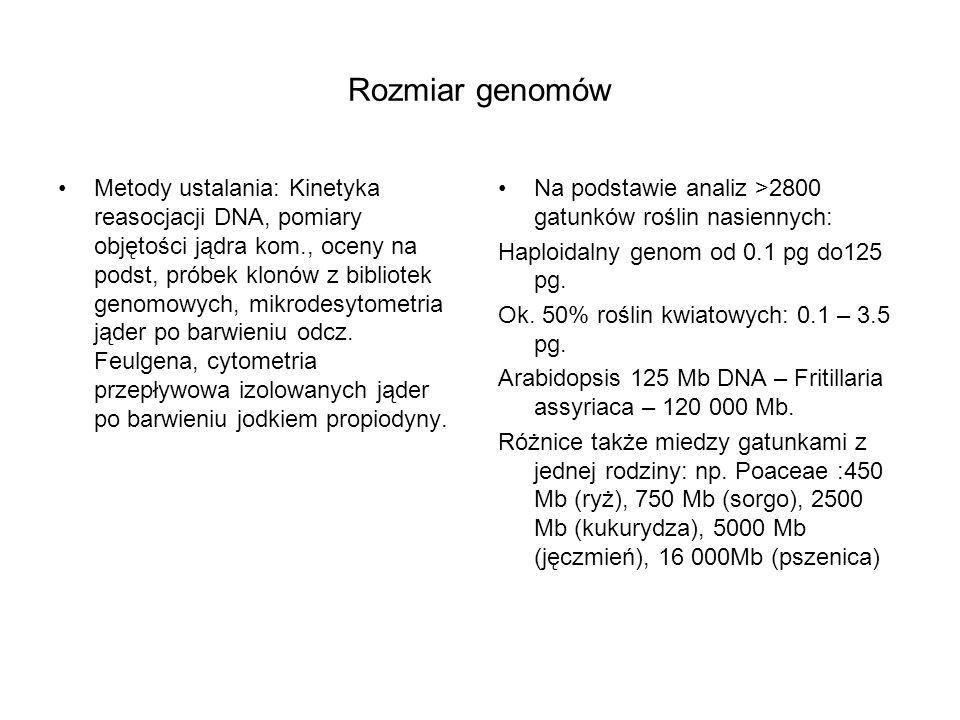 Rozmiar genomów