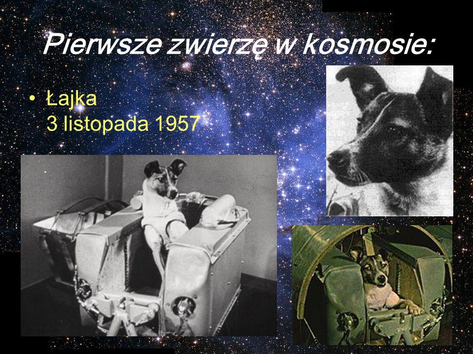 Pierwsze zwierzę w kosmosie: