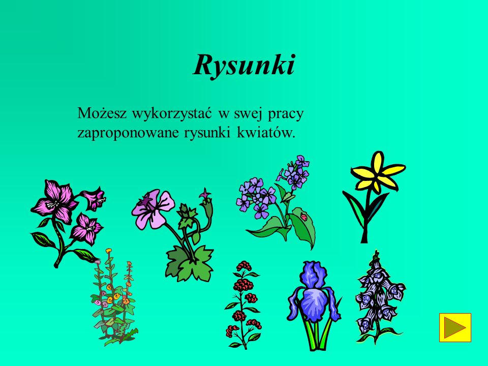Rysunki Możesz wykorzystać w swej pracy zaproponowane rysunki kwiatów.