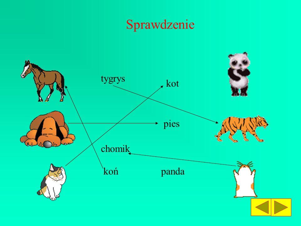 Sprawdzenie tygrys kot pies chomik koń panda