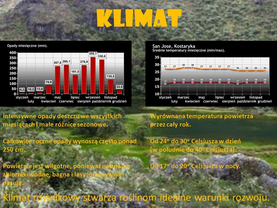 Klimat Klimat równikowy stwarza roślinom idealne warunki rozwoju.
