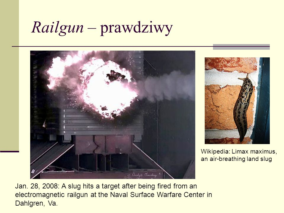 Railgun – prawdziwy Wikipedia: Limax maximus, an air-breathing land slug.