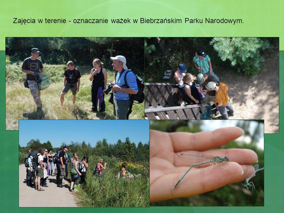 Zajęcia w terenie - oznaczanie ważek w Biebrzańskim Parku Narodowym.