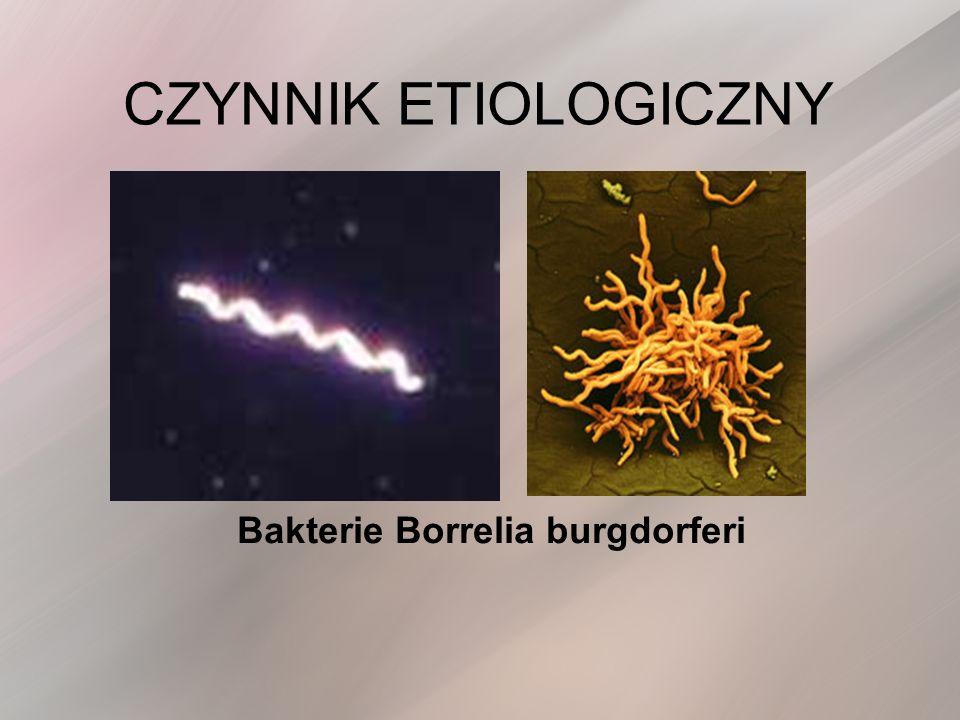 Bakterie Borrelia burgdorferi